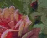 Розы. Фрагмент